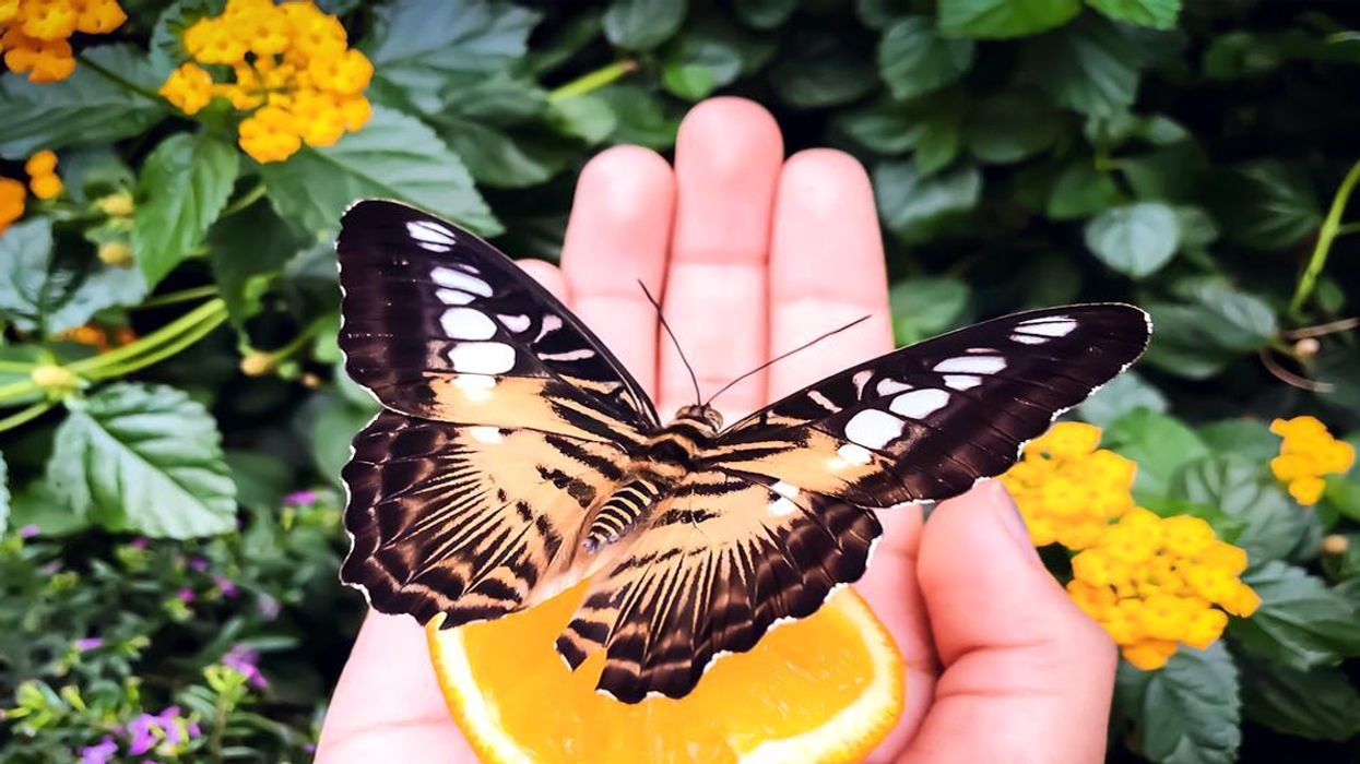 You Can Visit This Amazing Butterfly Garden Next Month In Ottawa