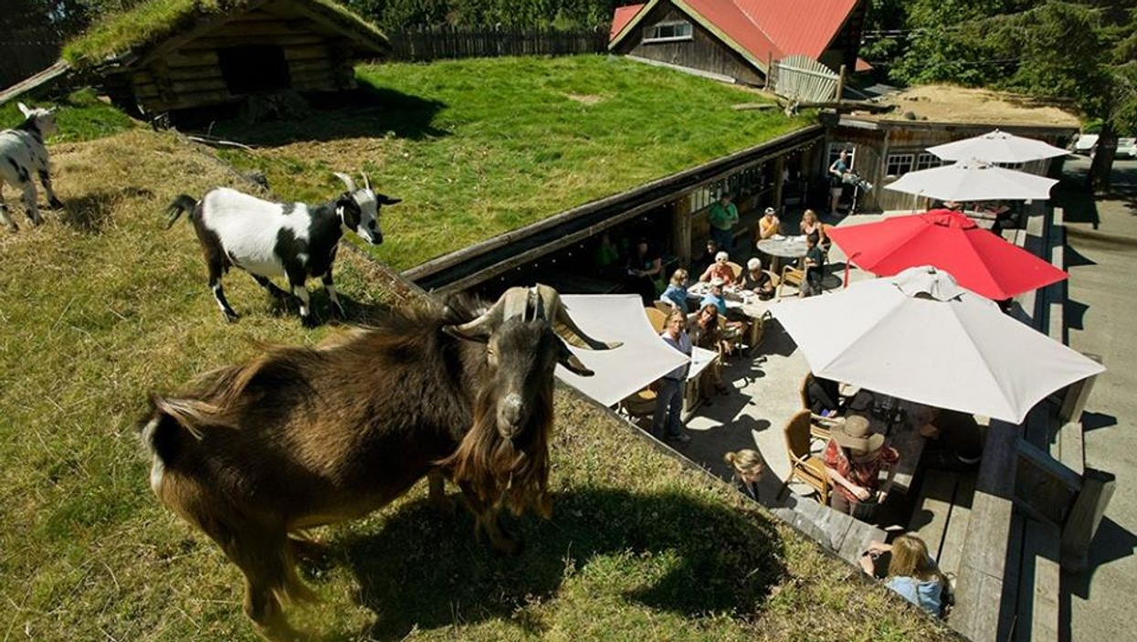 You Can Eat Lunch With Goats On The Rooftop Of This B.C. Market