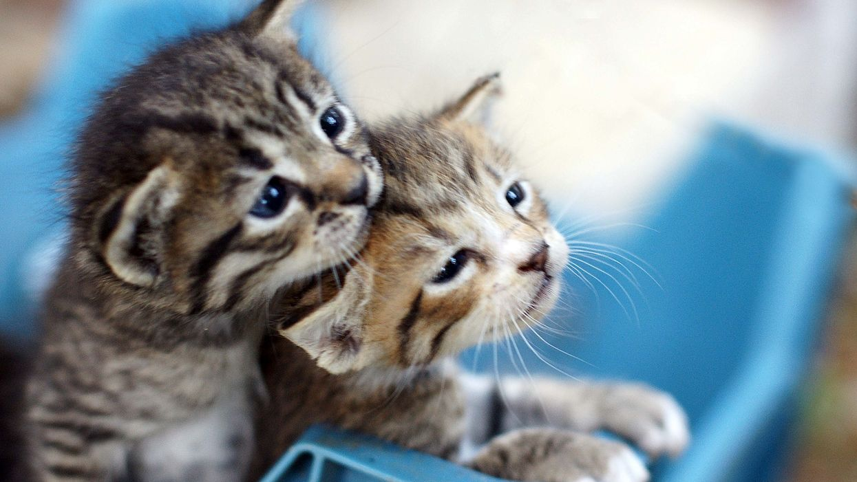 You Can Get Paid To Live On A Greek Island And Cuddle With Kittens All Day
