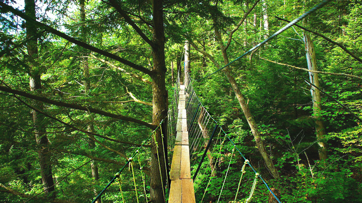 The World's Longest Canopy Boardwalk Trail Is Located In An Ontario Forest