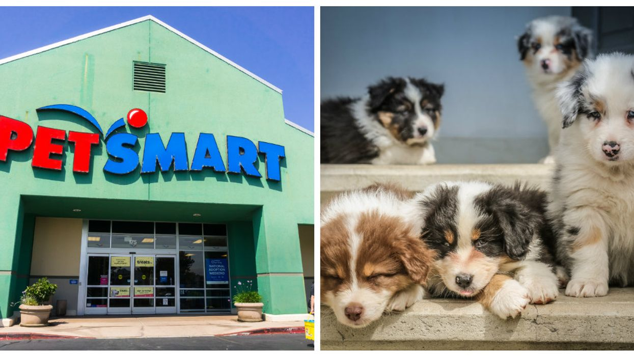 PetSmart Locations Across Canada Are Hosting A Massive Adoption Weekend