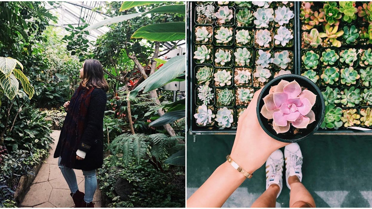 This Adorable Botanical Garden In Toronto Is Hosting A Massive Plant Sale This Fall