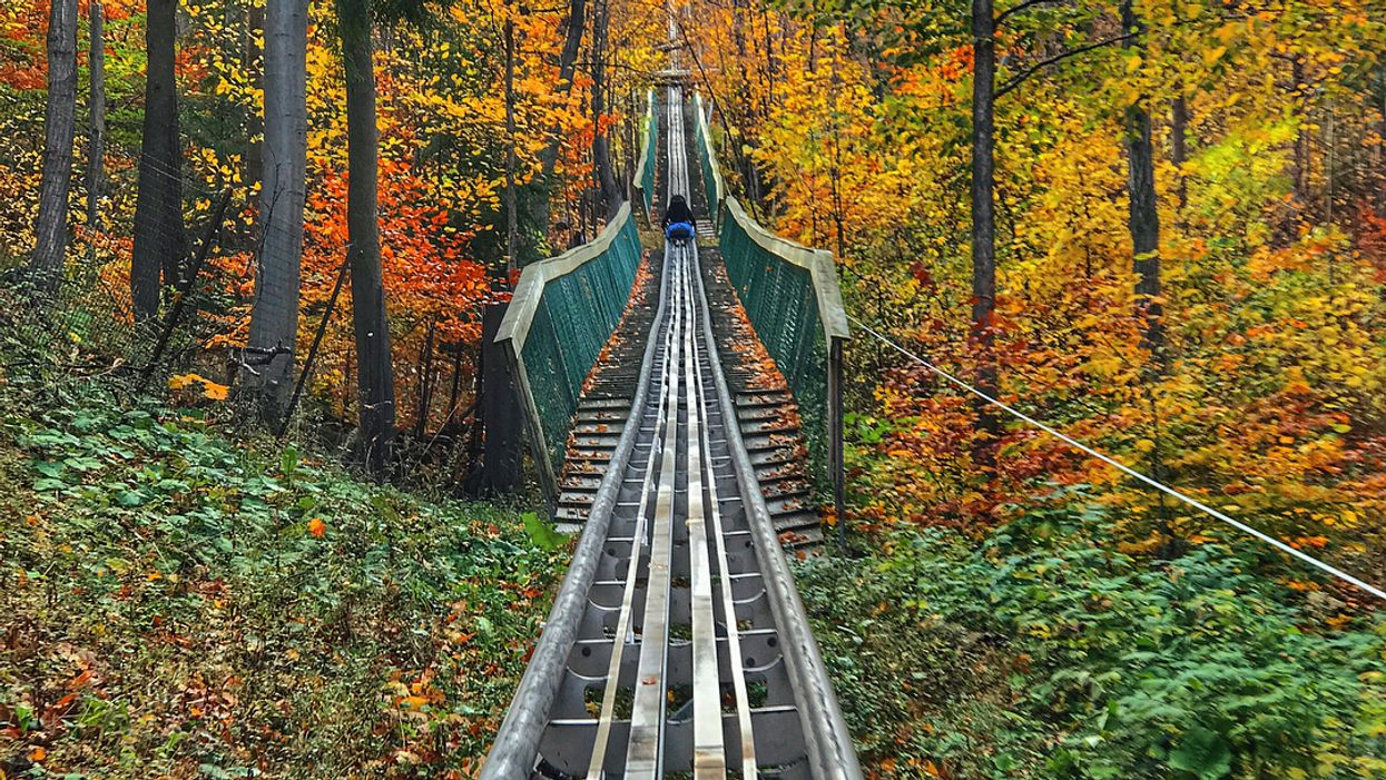 You Can Ride This 1km Mountain Coaster Through The Forest In Ontario This Fall