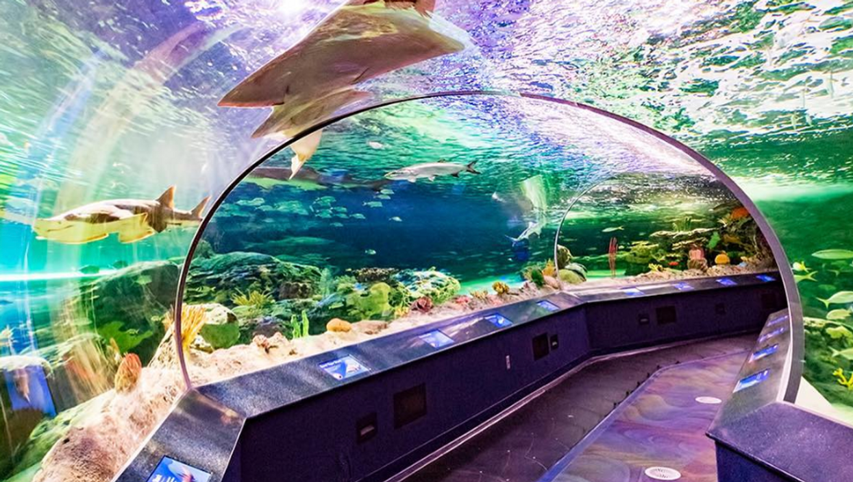 You Can Spend The Night Underwater At Ripley's Aquarium's 19+ Event This Fall In Toronto