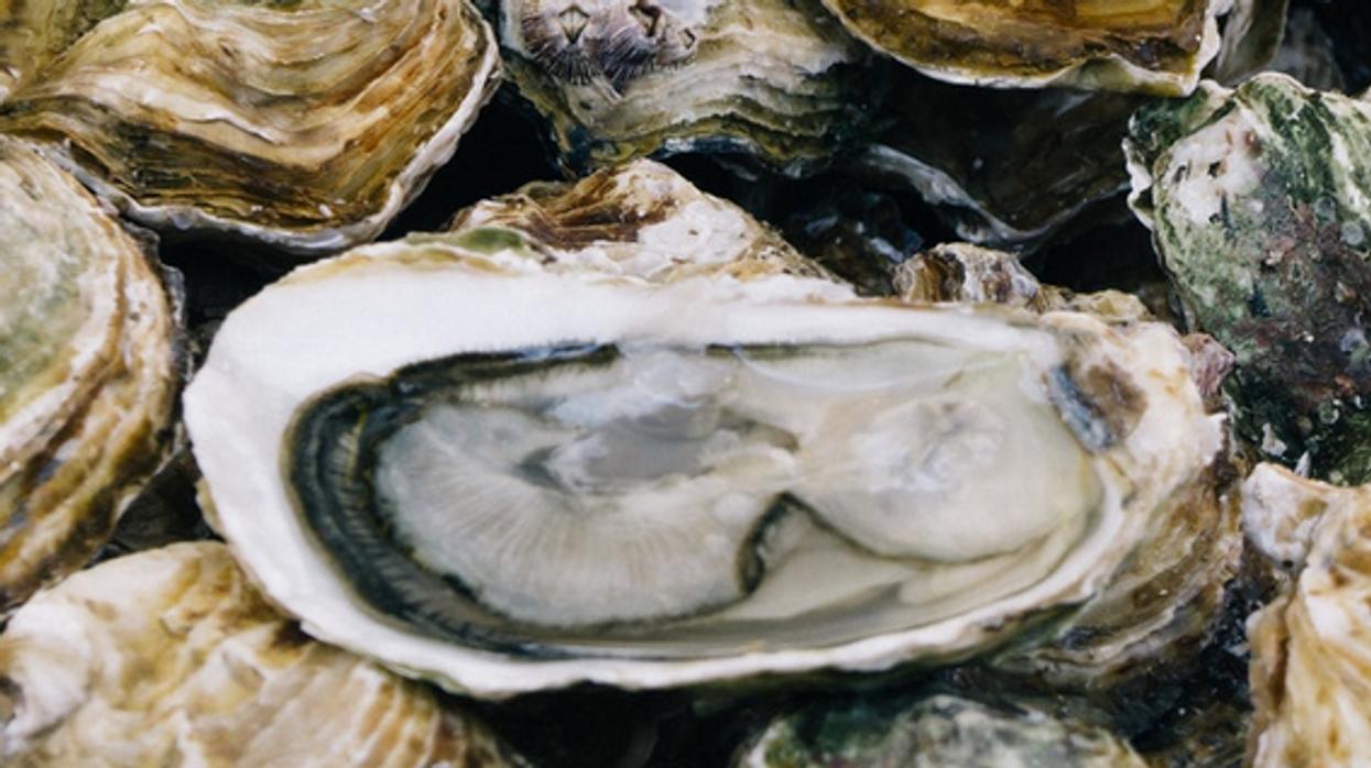 Santé Canada fait un rappel d'huîtres vendues au Québec à cause d'une potentielle contamination à la salmonelle