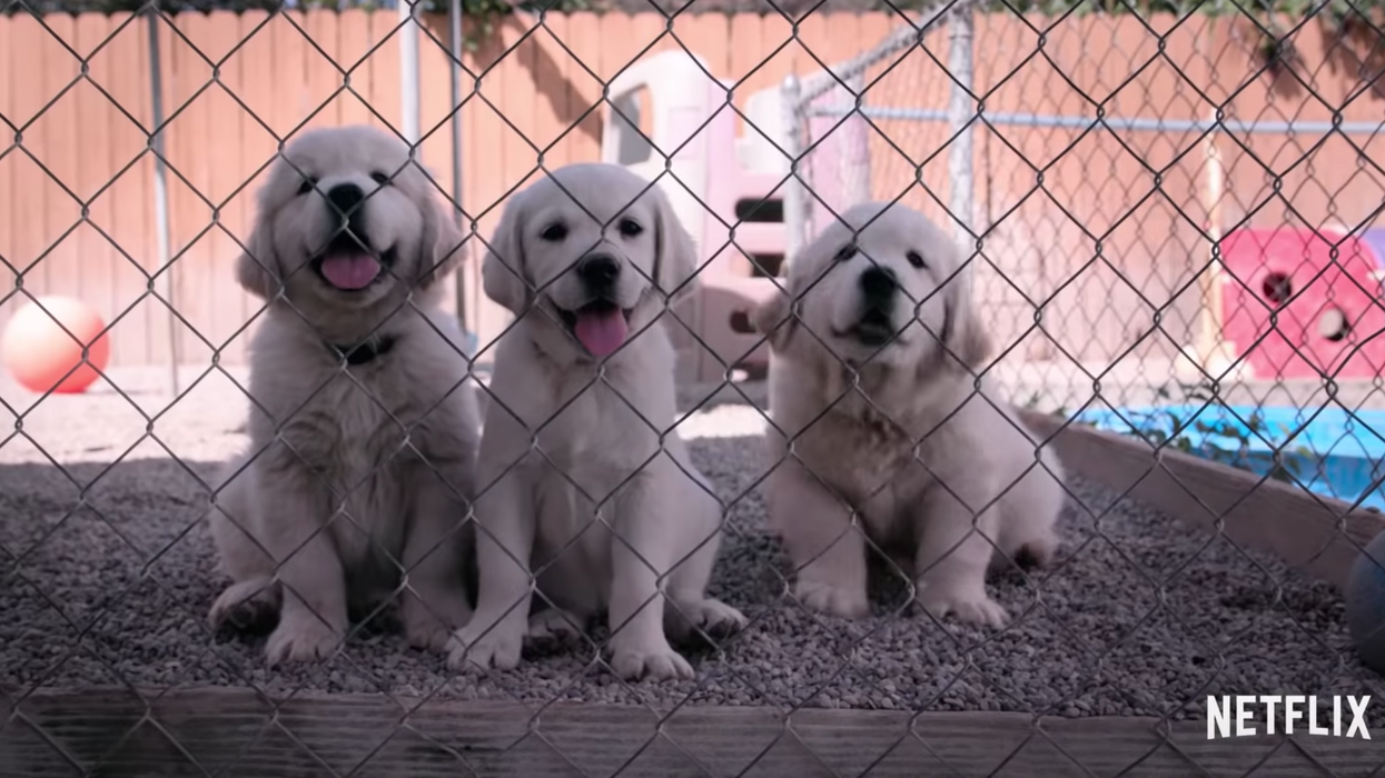 Netflix Canada Is Releasing A 6-Part Series Dedicated To Dogs And You Won't Be Able To Finish It Without Sobbing