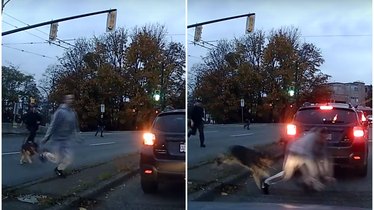 Watch A Vancouver Police Canine Viciously Take A Man Down In The Middle Of The Road (VIDEO)