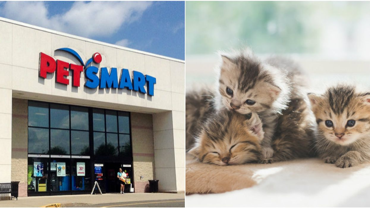 PetSmart Is Hosting A Huge Cross-Canada Adoption Event This Weekend