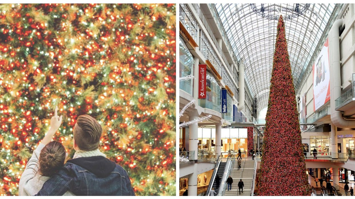 Canada's Tallest Christmas Tree Is Getting Lit Up In Toronto Today!