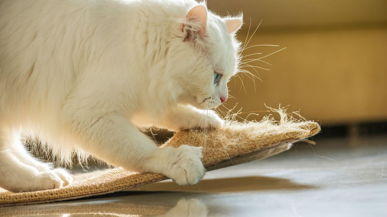 Two Canadian Provinces Are Banning The Declawing Of Cats As Of 2019