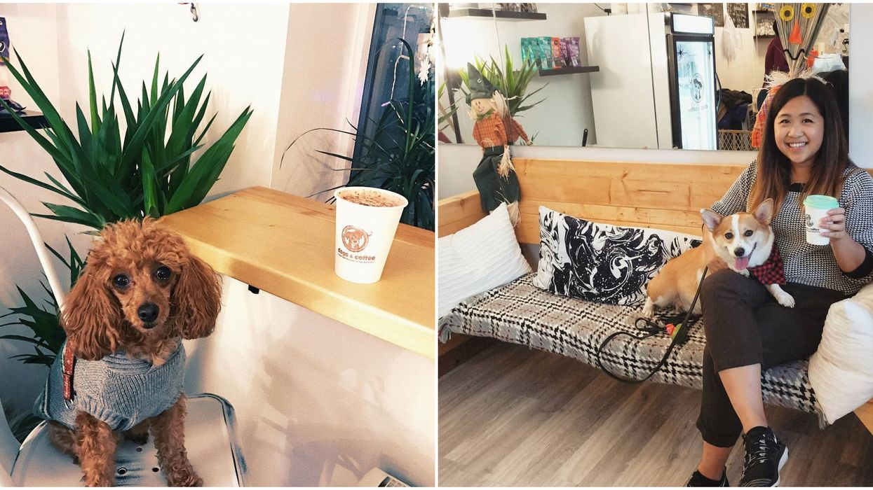 Toronto Just Opened A Dog Cafe And It's So Adorable