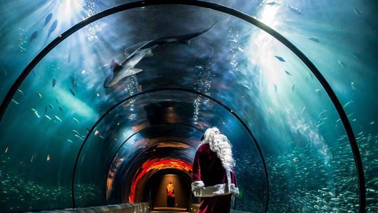 The Vancouver Aquarium Is Transforming Into A Magical Sea Of Lights For The Holidays
