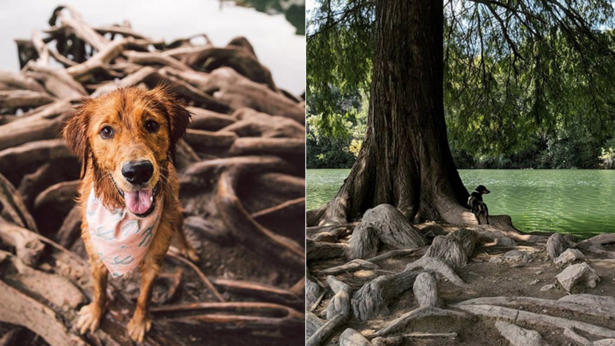 There's A ''Dog Island'' Hidden Near Austin And You Can Visit It For Free