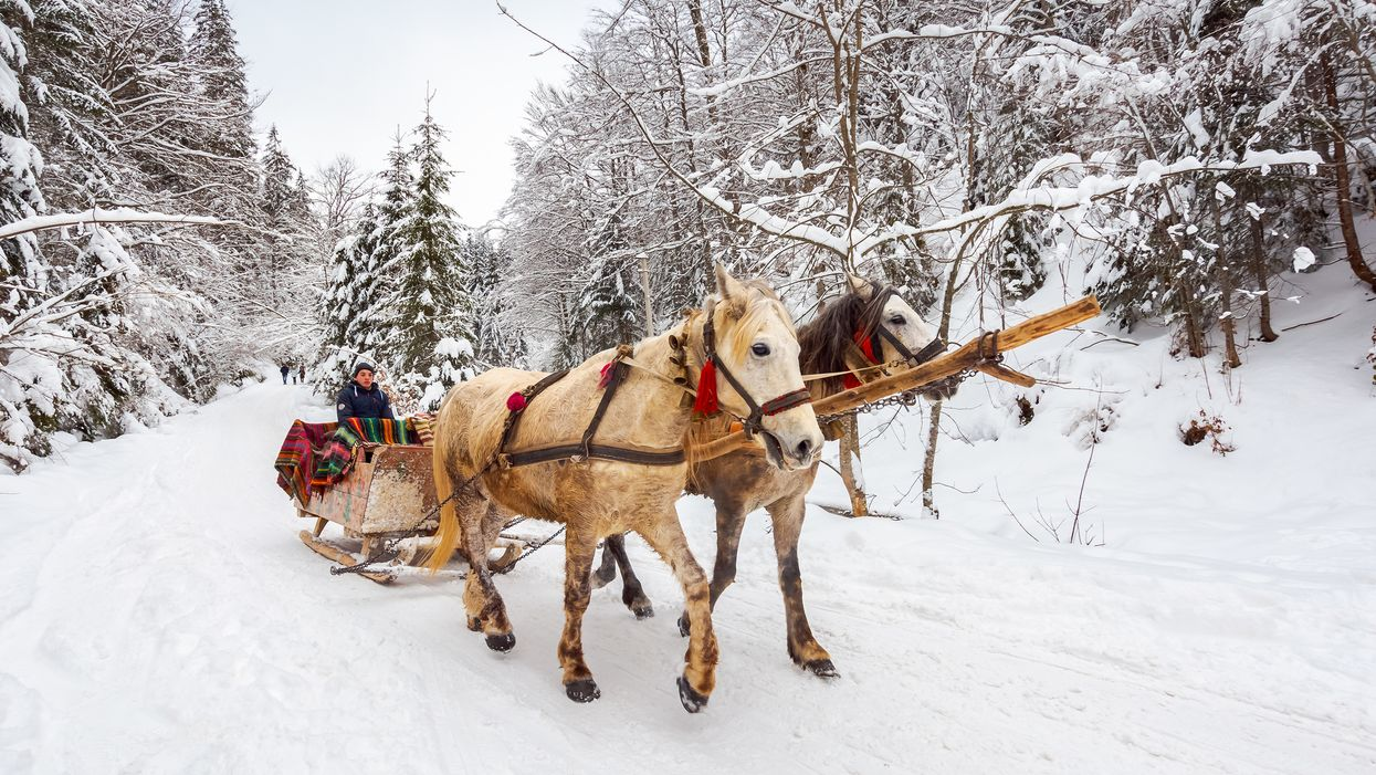 This 40-Minute Sleigh Ride In Ontario Takes You Through A Winter Wonderland