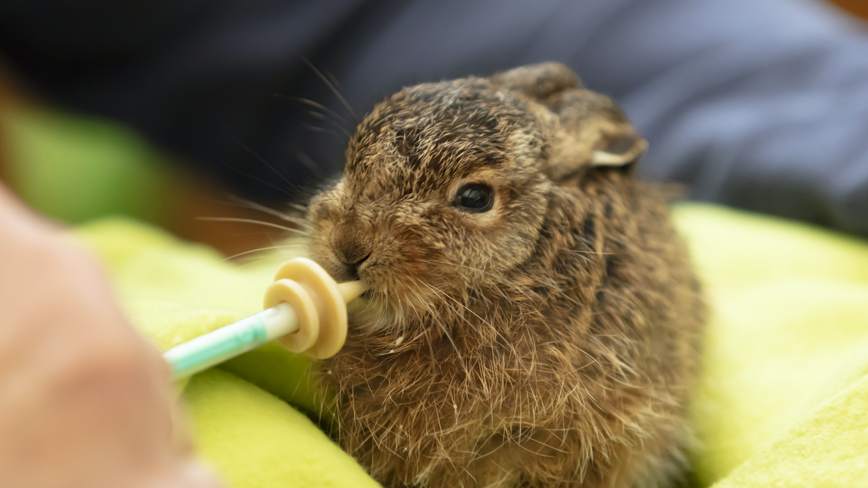 This Wildlife Refuge Centre In Ontario Is Looking For Volunteers To Feed Baby Orphan Animals