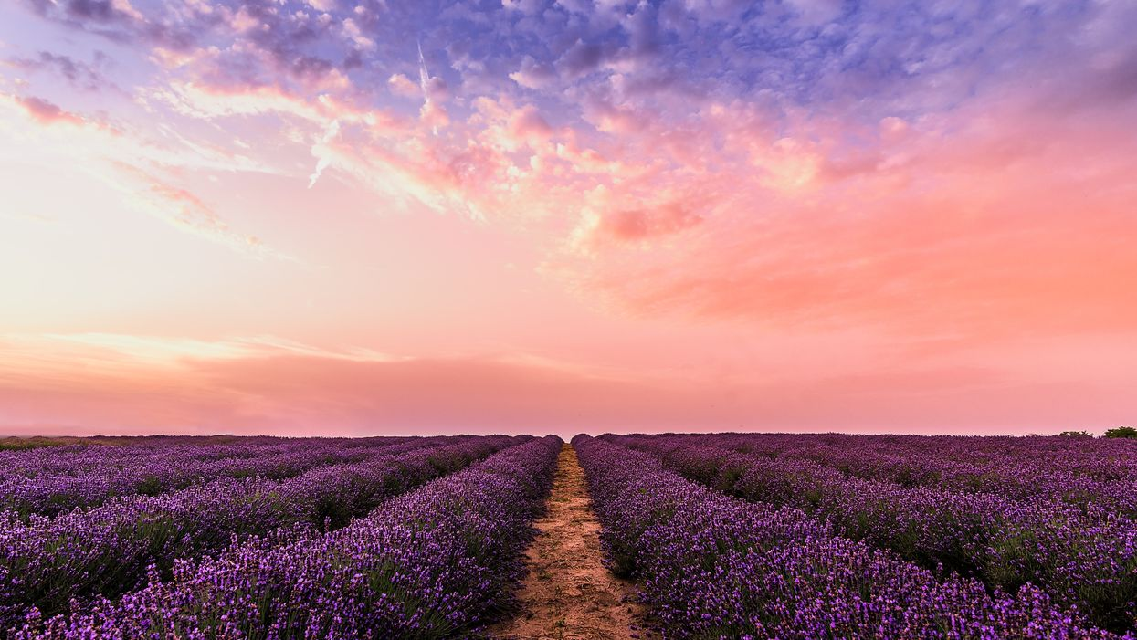 You Need To Visit Ontario's Largest Lavender Farm This Spring