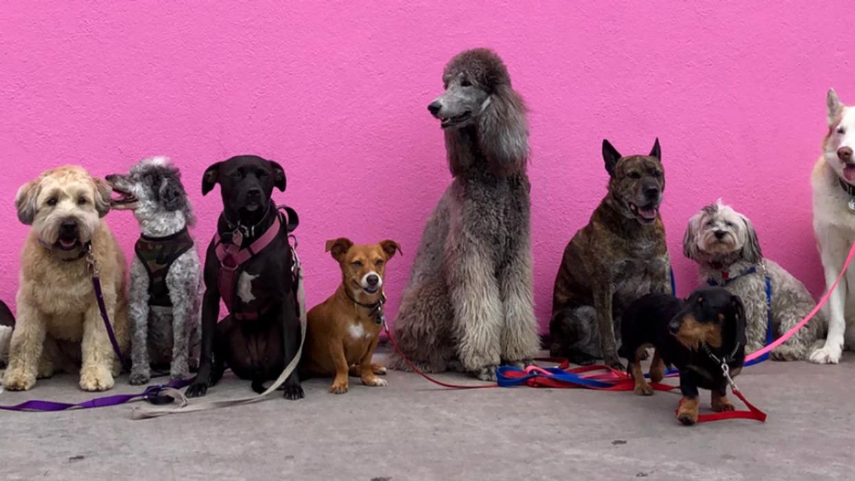 Toronto Is Getting 6 Indoor Pop-Up Dog Parks Today
