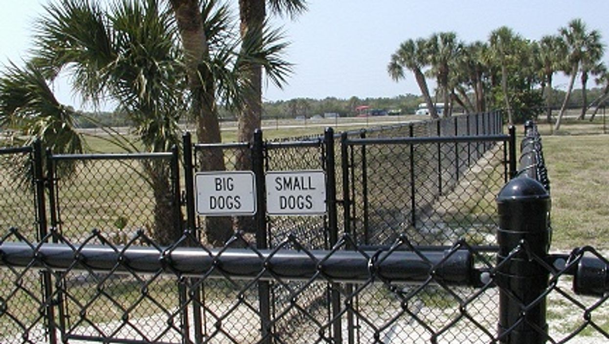 Raccoons Carrying Deadly Virus Found In A Florida Dog Park