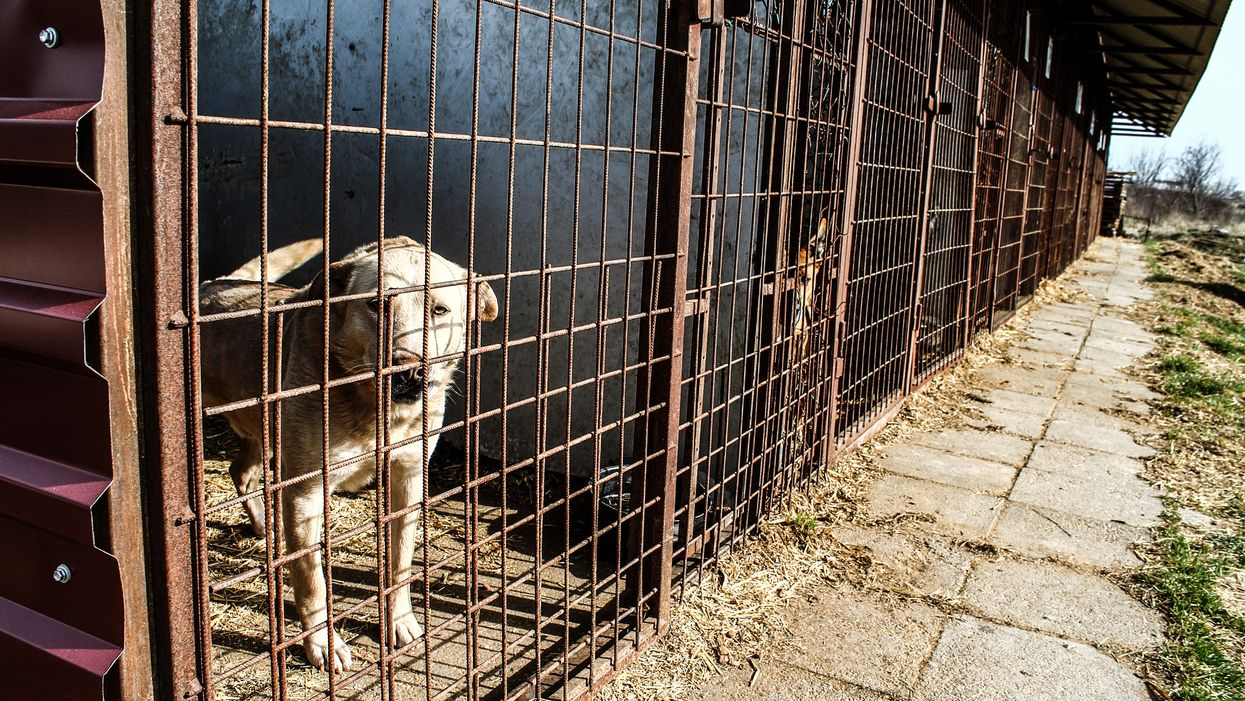 It's Official, Florida Lawmakers Wants To Make Animal Cruelty A Felony