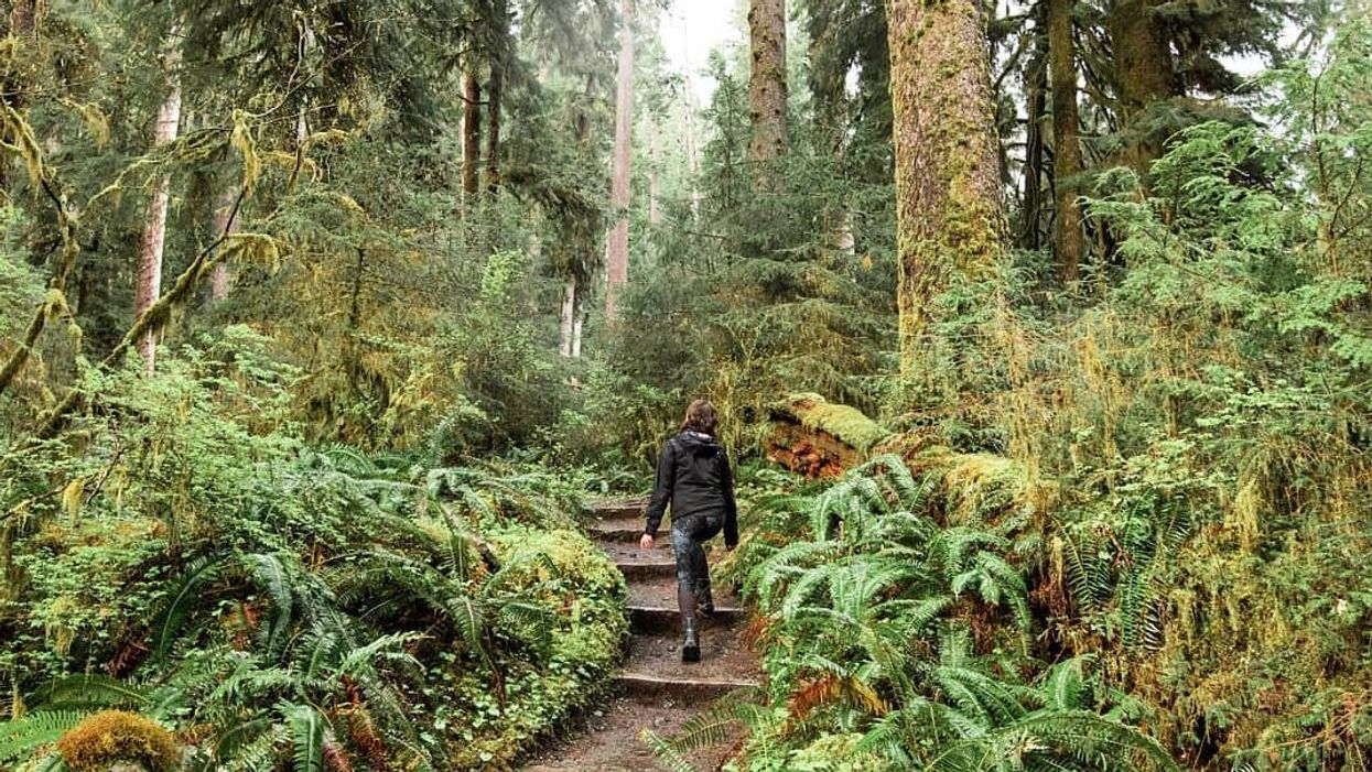 You Can Explore An Ancient Rainforest Just Outside Of British Columbia And It's Magical