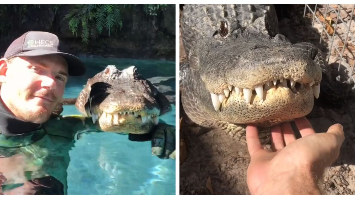 Florida Man Posts Extremely Stressful Videos Of His Close Encounters With Alligators