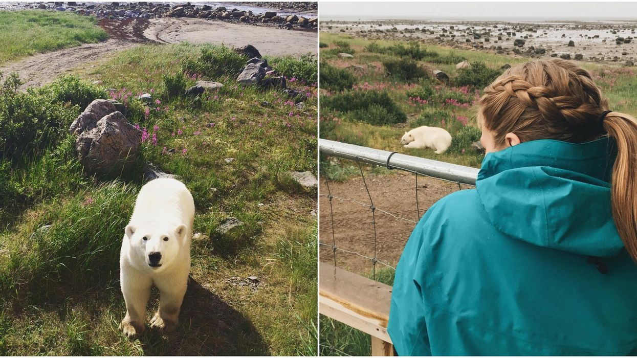 You Can Stay At These Eco-Lodges In Canada Where Polar Bears Actually Walk Right By You