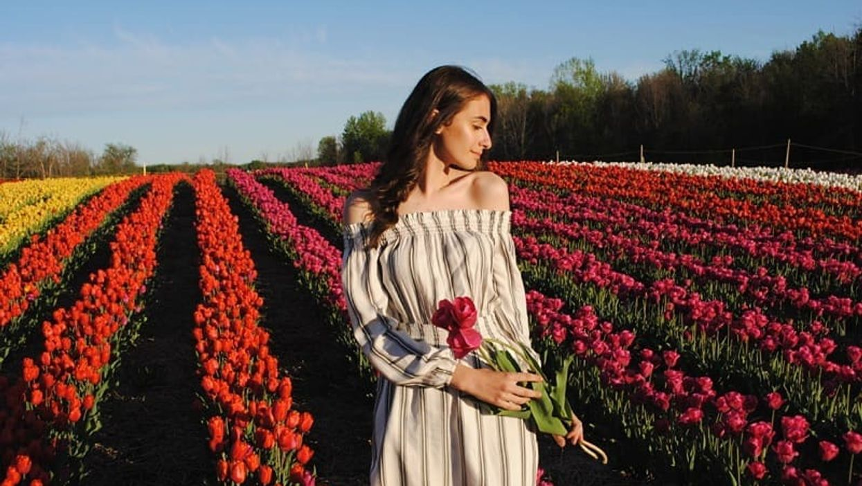 Cet immense champ de tulipes à Laval est l'ultime #Instagoal