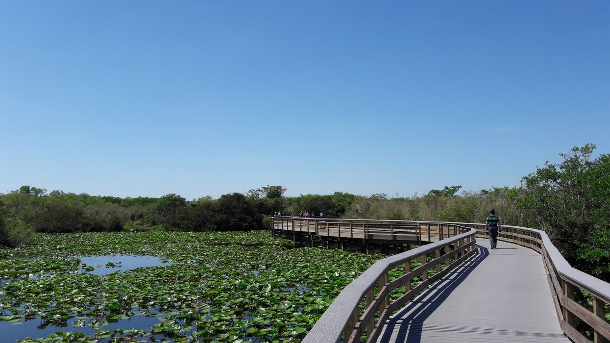 People Are Not Happy The Florida Everglades Are Now Open For Oil Drilling