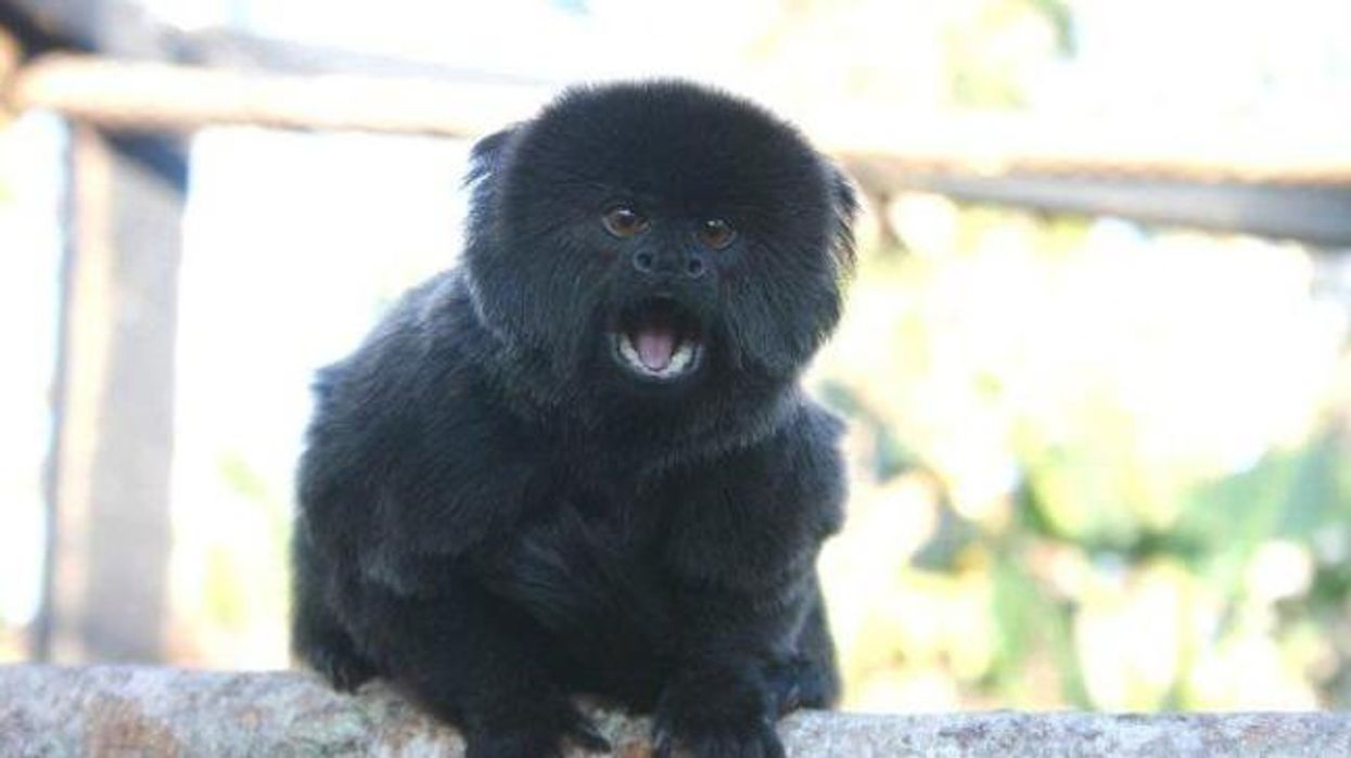 People Are Wondering How A Super Rare Monkey Was Stolen Overnight From A Florida Zoo