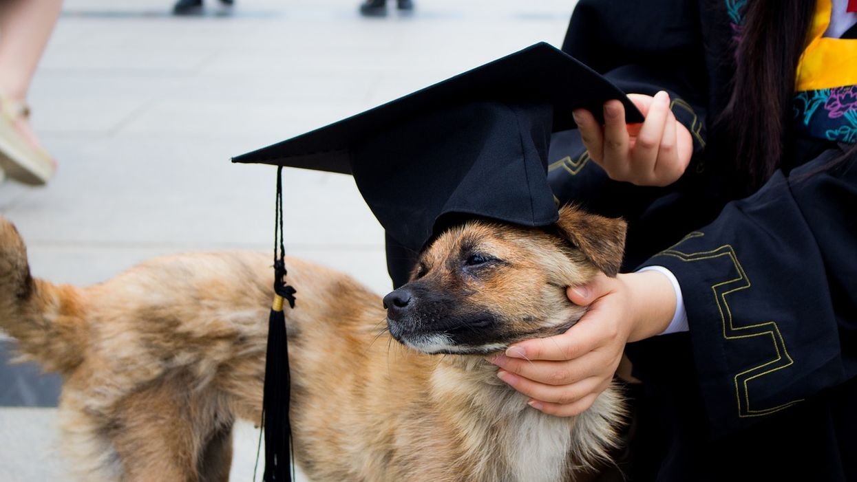 You Can Attend A Florida Police-Dog-In-Training Graduation Ceremony Next Month