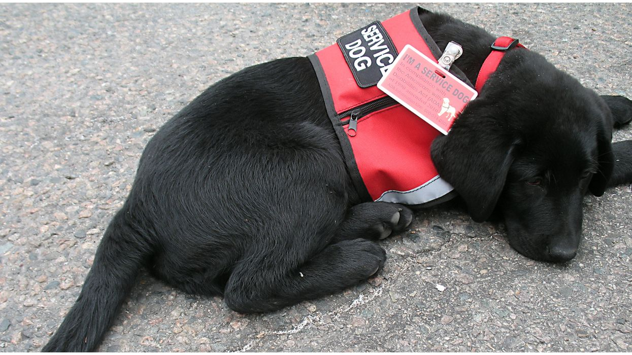 You Can Now Adopt A Puppy That Failed Service Dog Training