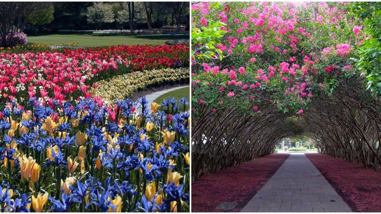 Texas' Largest Floral Festival Has Just Begun