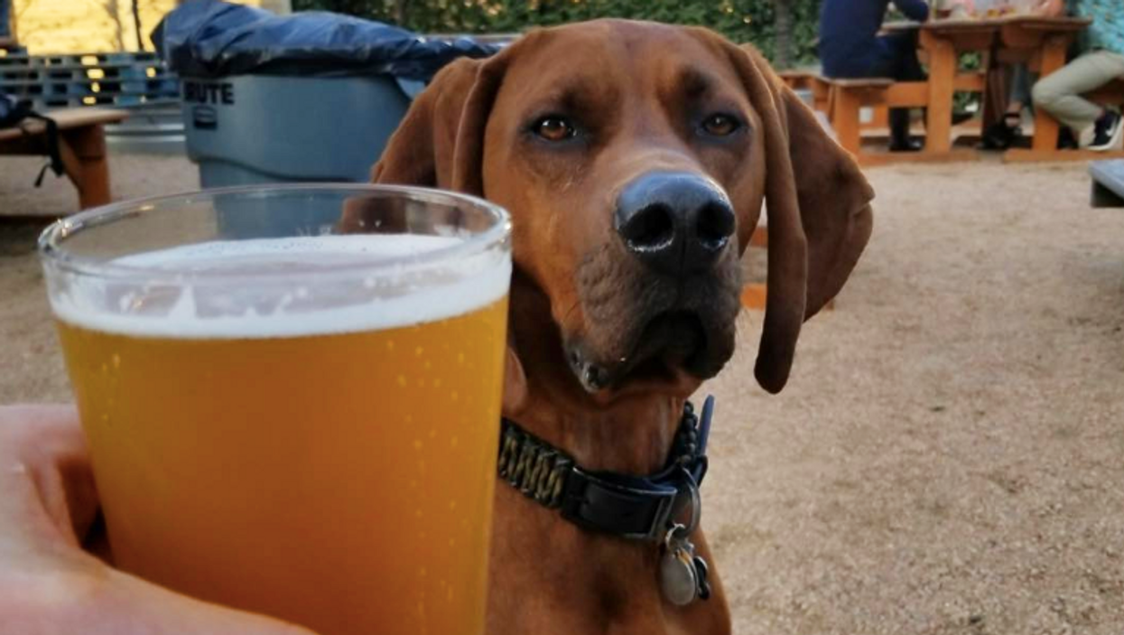 This Texas Brewery Is Hosting The Perfect Date Night For You And Your Dog This Weekend