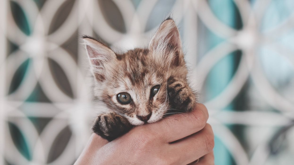 Alberta Veterinarians Voted To Ban Declawing And Other Harmful Animal Surgeries In The Province