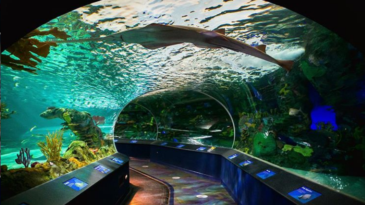Ripley's Aquarium Of Canada Is Offering 30% Off Admission Today For Anti-Bullying Day