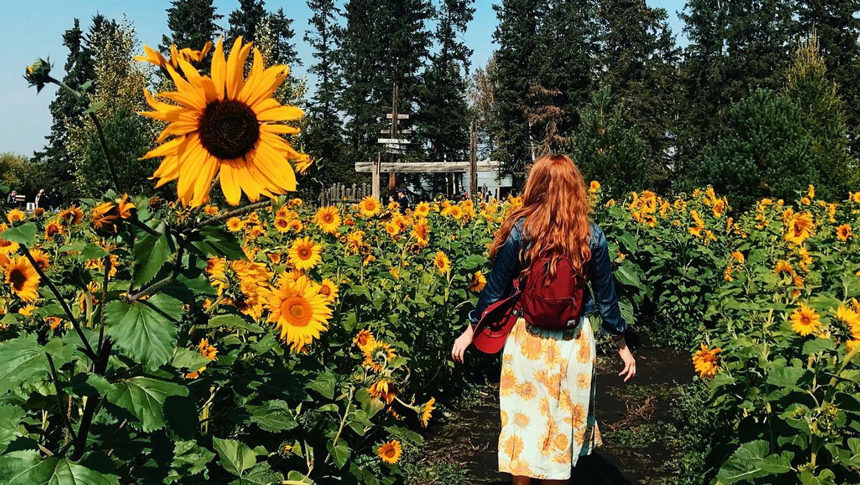 You Need To Visit This Massive Maze Of Sunflowers In Alberta This Summer