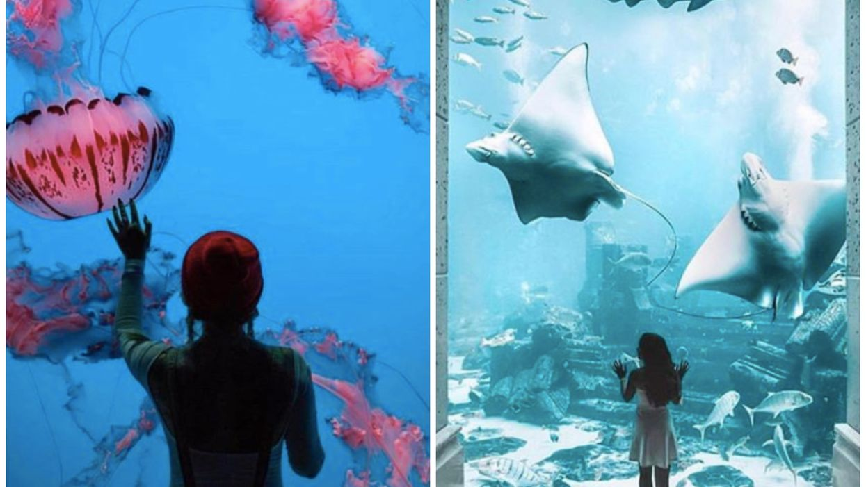 The Most Magical Aquarium Fest Is Finally Coming To Texas Next Month