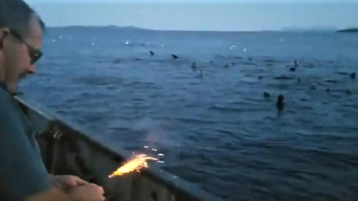Canadian Fisherman Filmed Throwing Dynamite Into Pack Of Sea Lions (VIDEO)