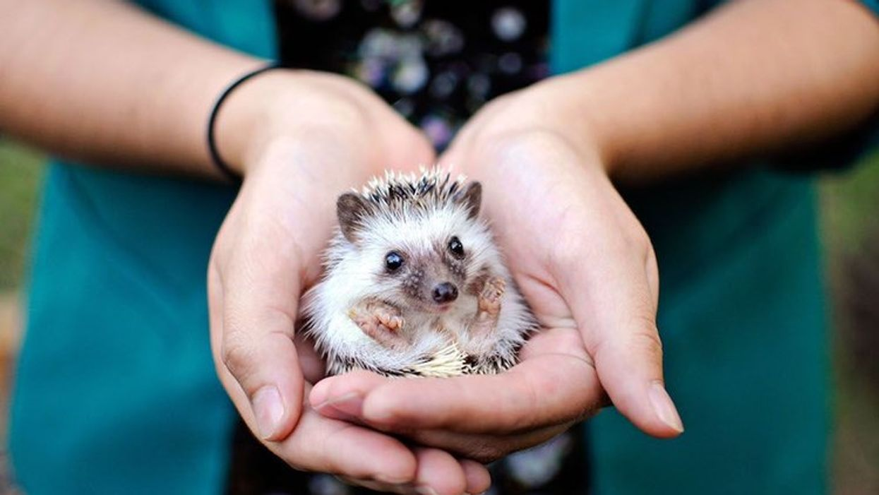 This Austin Library Is Hosting The Cutest Festival Ever This Month With Tons of Tiny Animals