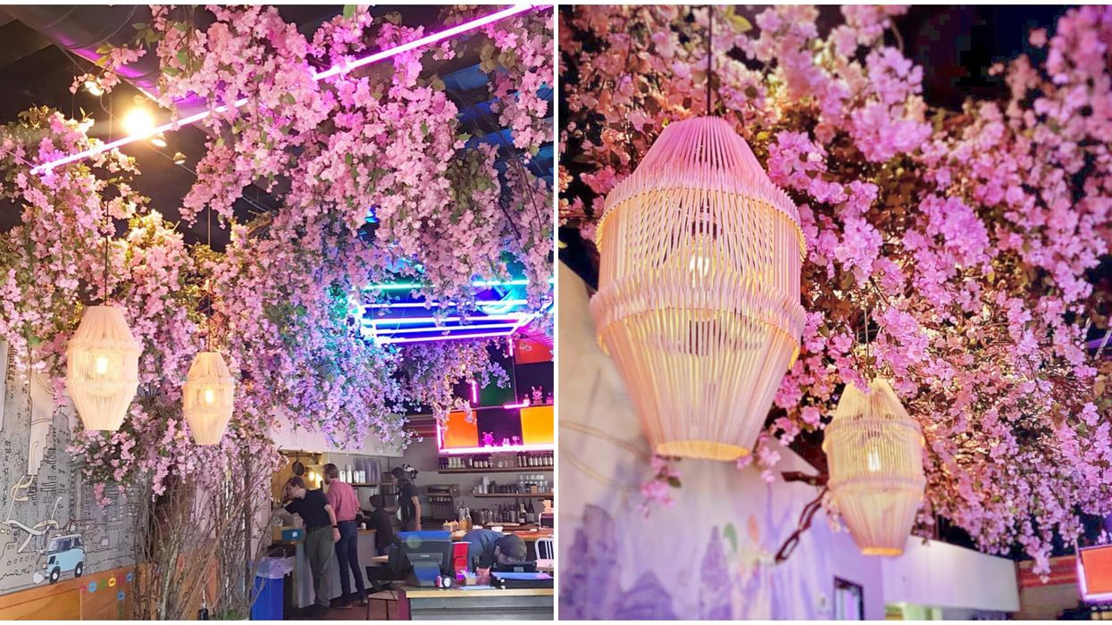 There Is Now A Massive 500 Pound Cherry Blossom Tree In The Middle Of This Austin Restaurant