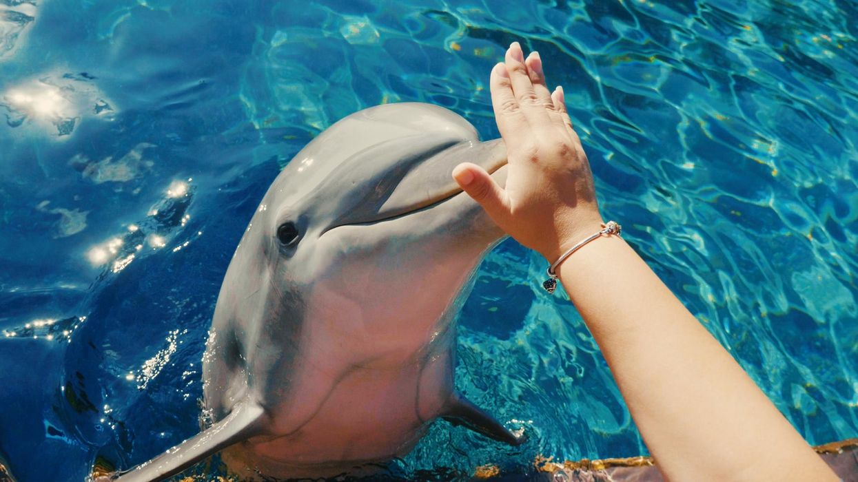 SeaWorld Orlando Is Offering Major Discounts On Their Dolphin Encounters This Month