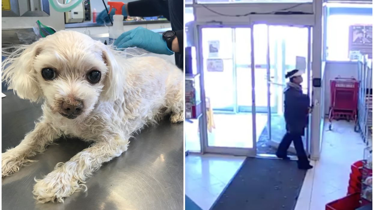 Blind, Diabetic Dog Had To Be Put Down After Being Abandoned In A Canadian Pet Store