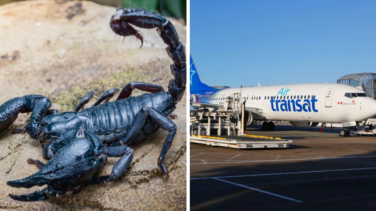 Canadian Student Gets Stung By Scorpion During A Flight Out Of Toronto