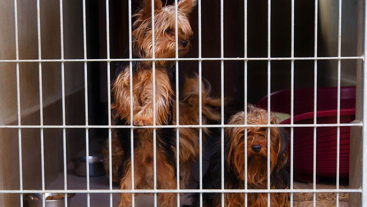 This Florida Animal Shelter Is So Overcrowded They Have To Put Two Dogs In Each Kennel