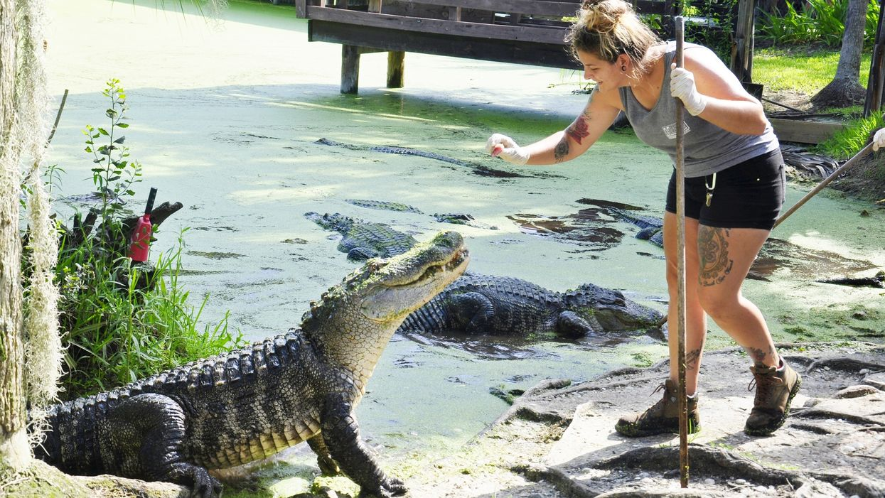 People Are Actually Feeding Wild Florida Gators And Making Them Too Comfortable Around Humans