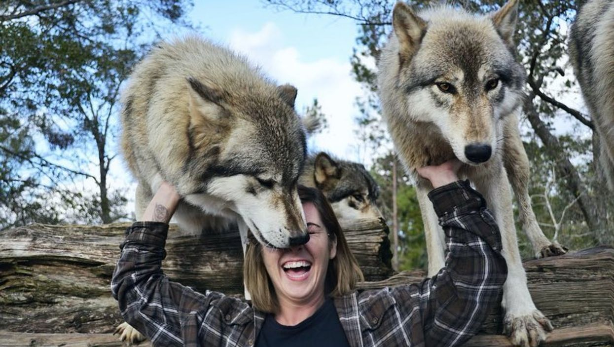 There Is A Magical Place In Florida Where You Can Get Up Close And Personal With Wolves