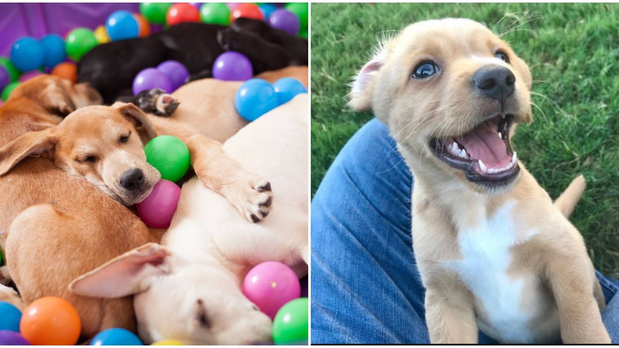Austin Is Having A Giant Free Puppy Party This Weekend