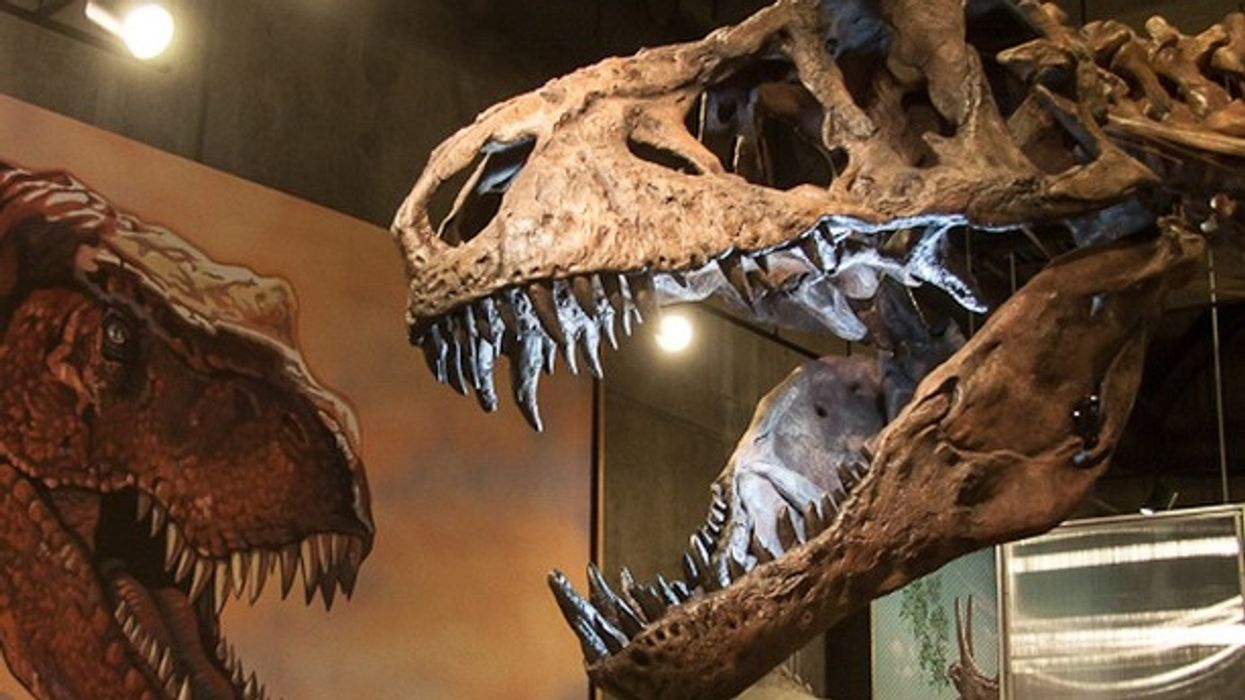 The World's Biggest T. Rex Was Just Discovered In Canada
