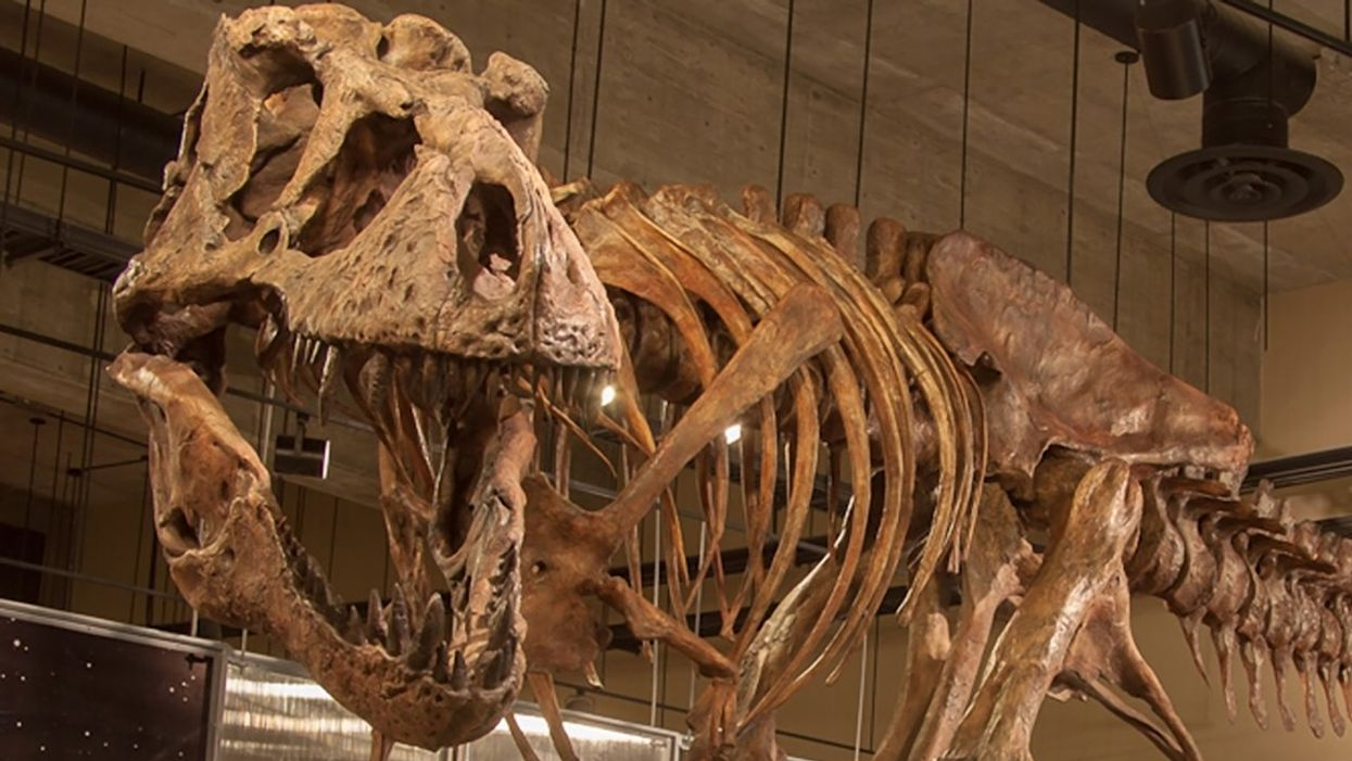 You Can Visit The World's Biggest T. Rex At This Canadian Museum This Spring