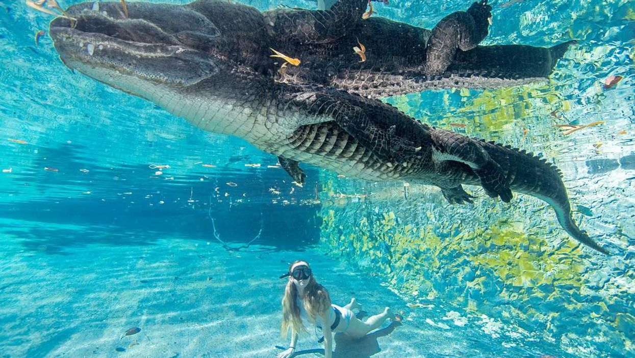 There Is A Place In Florida Where You Can Actually Swim With Alligators